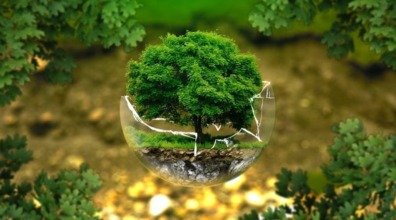 Mein eigener Baum auf der indonesischen Insel Bali?